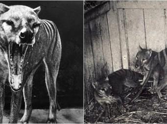 멸종된 줄 알았던 이 '동물'이 80년만에 나타났다 (동영상)