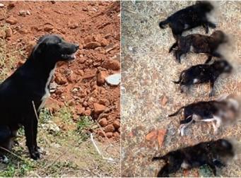 '교육 시킨다'고 어미 보는 앞에서 강아지 8마리 차례로 죽인 여성 (사진3장)