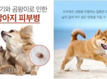 진드기와 곰팡이로 인한 강아지 피부병(사진7장)