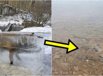 퓨마오 사슴이 얼음물에서 발견된 이유