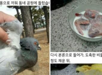 SNS서 경악.. '비둘기 오븐구이' 만드는 과정 (사진)
