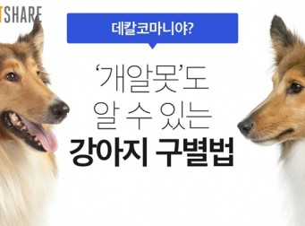 '개알못'도 알 수 있는 강아지 구별법 (사진8장)