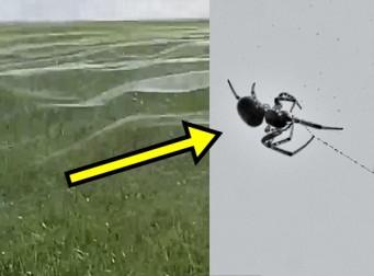 바람 따라 파도 치는 거미줄 (동영상)