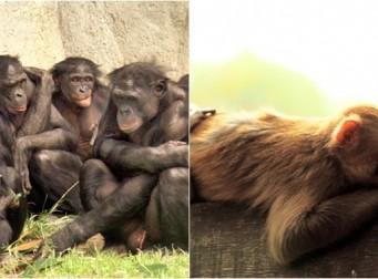 원숭이도 '성매매'를 한다