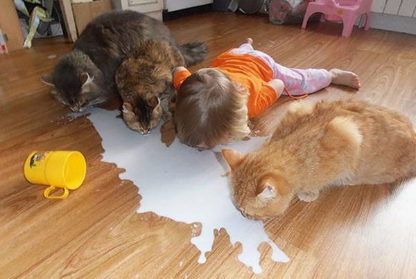 http://img.postshare.co.kr/images/2017/04/24101815/funny-kids-babysitting-pets-4-58f71dec2f53e__605.jpg