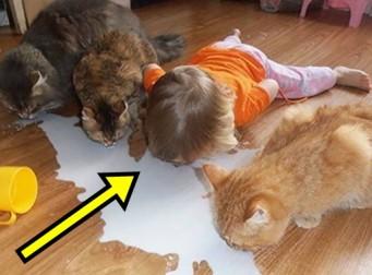 아이들과 애완동물이 같이 있으면 안 되는 이유 (사진10장)