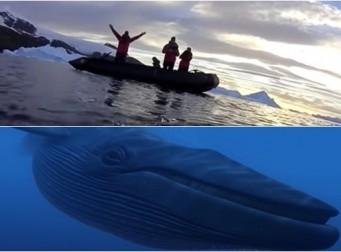 고래의 시선으로 촬영한 '고래들이 사는 세상' (동영상, 사진 4장)