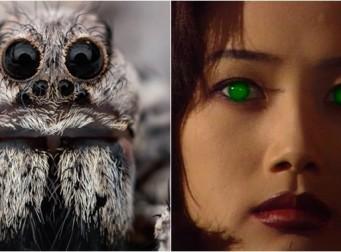 '거미'에 관한 소름 돋는 사실 20가지(사진 20장)