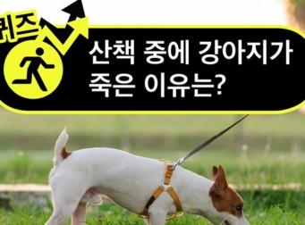 [퀴즈] 산책 중에 강아지가 죽은 이유는?