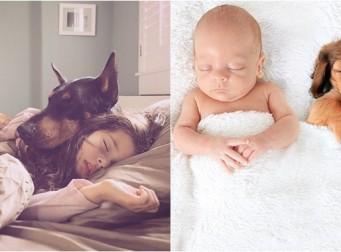 보기만해도 '심쿵'하게 만드는 아기와 댕댕이 사진들 (사진 15장)