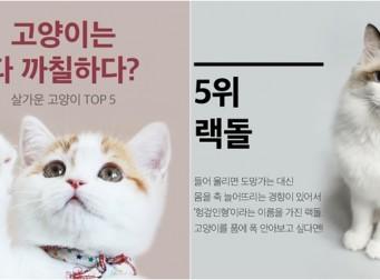 고양이는 다 까칠하다? (사진7장)