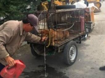 개장수가 철창 속 강아지에게 '억지로' 물을 먹인 이유