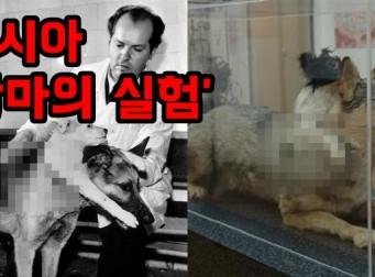 두 강아지를 '하나'로 이어 붙인 잔인한 '동물 실험' (사진 5장)