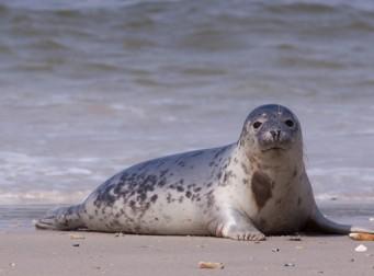 영국 해안에서 바다표범이 사라지고 있는 이유