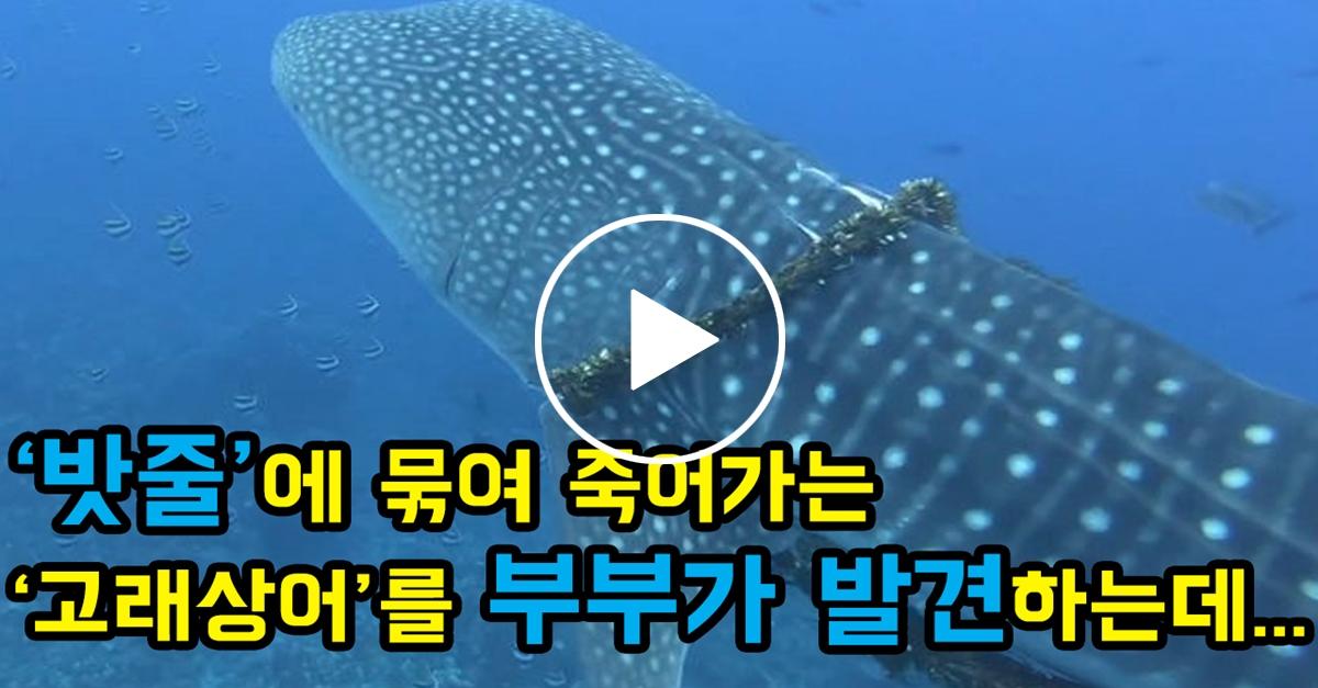 '밧줄'에 묶여 죽어가는 '고래상어'를 발견한 부부의 반응