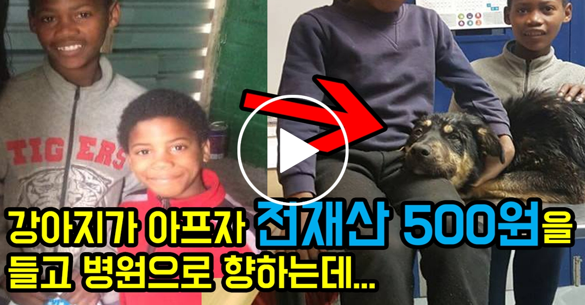 강아지가 아프자 형제는 전재산 500원을 들고 병원으로 향하는데...
