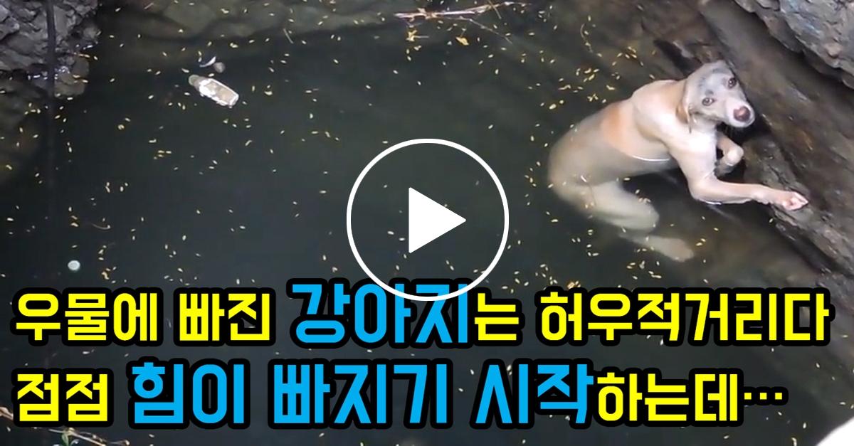 우물에 빠진 강아지는 허우적거리다 점점 힘이 빠지기 시작하는데...