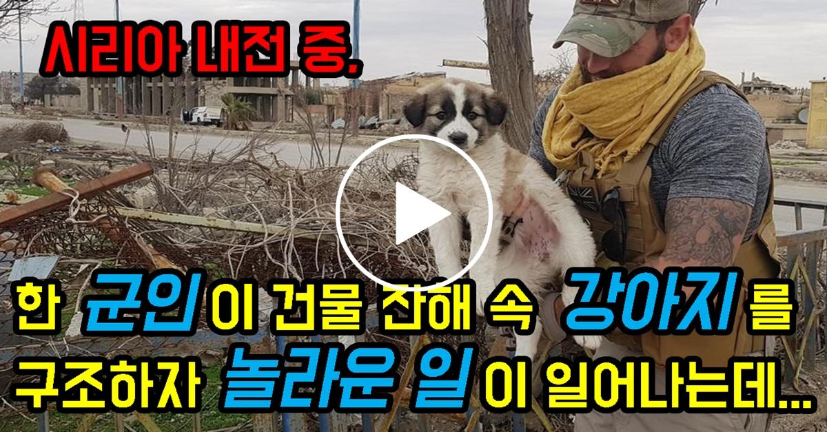 한 군인이 건물 잔해 속 강아지를 구조하자 놀라운 일이 일어나는데...