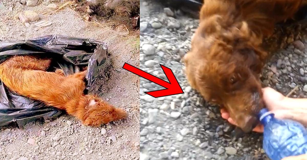살기 위해 고개만 든 채 물을 받아먹던 강아지가 보여준 기적